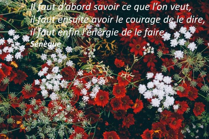 Annie_Sprat_Sénèque_17_06_26